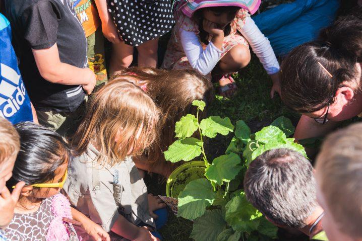 Aktion Zuckertüte - Zuckertütenbaum - Leipziger Kinderstiftung